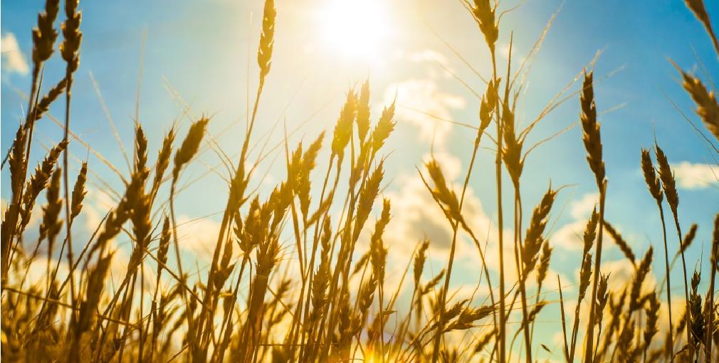 IFFCO Rolls Out Digital Transformation for Farming Community